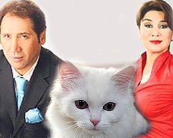 Türkiye'de Bir İlk! Kediye Nafaka