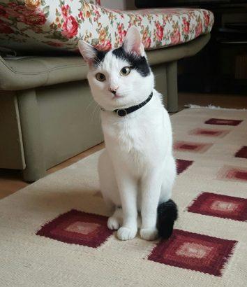 Beyaz kedi