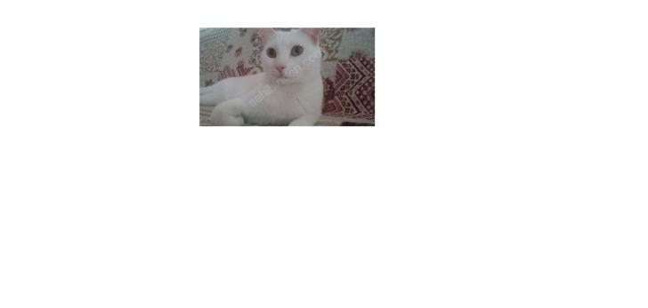 Ankara kedisi Yuva arıyor