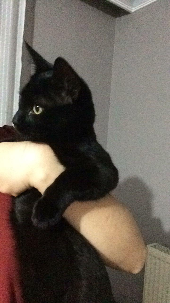 4 aylık minnoş kedimize ev arıyoruz :(