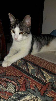 Erkek tekir kedi için Geçici/Kalıcı Yuva – İSTANBUL