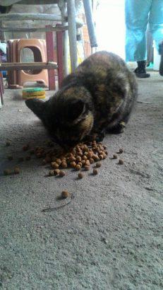 Hamile kedimiz çaresiz acil yuva