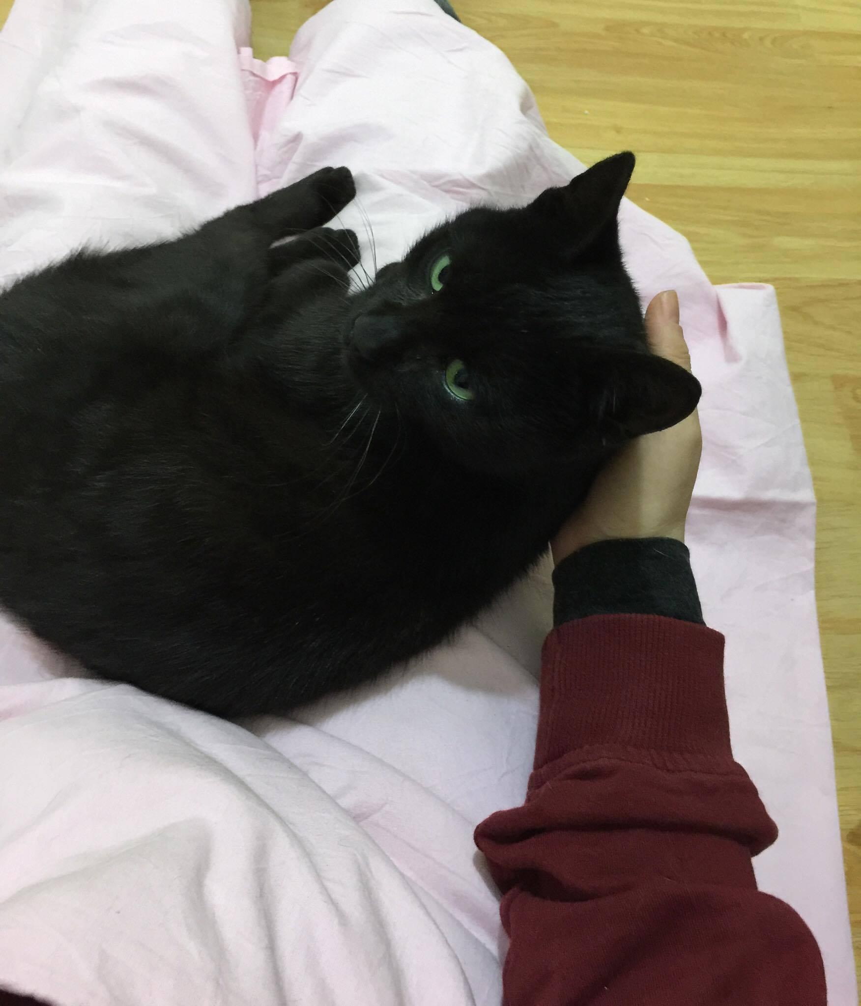 Gördüğünüz en sırnaşık, sevgi delisi kedi
