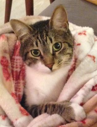 Sosyetik kedi Guiness Yuva arıyor!