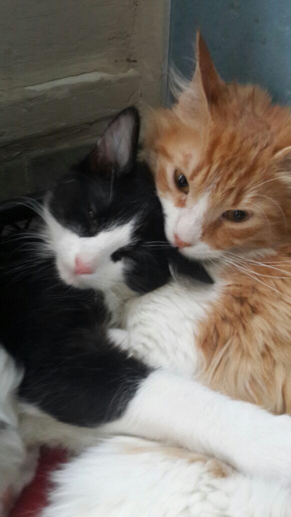 Kedi sahiplendirme