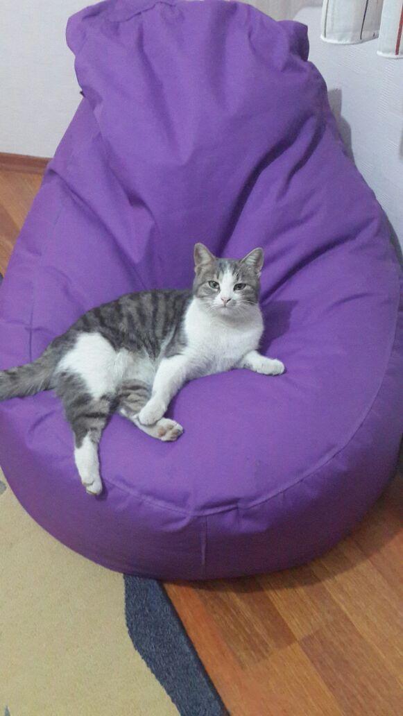 Kedime Geçici Ev Arıyorum (Konya)