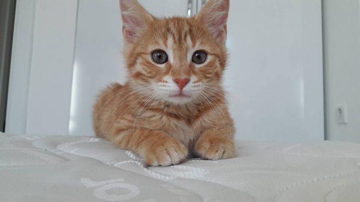 çok tatlı sıcakkanlı ve oyuncu Mırmır'a yuva arıyorum