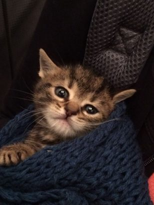 1 Aylık Kedi acil yuva aranıyor