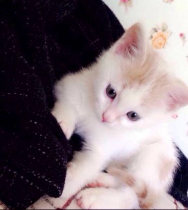 Bembeyaz pamuk gibi kedimize sevgi dolu bir yuva arıyoruz