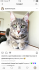 10 aylık kısır erkek kedi tüm aşıları tamam aşı karnesi mevcut