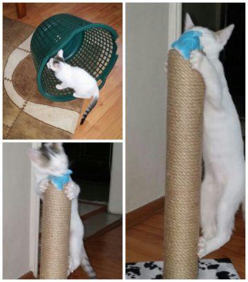 Çalıştığım için kedime ev arıyorum