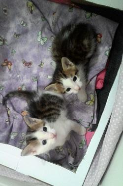 Miniğin yavruları