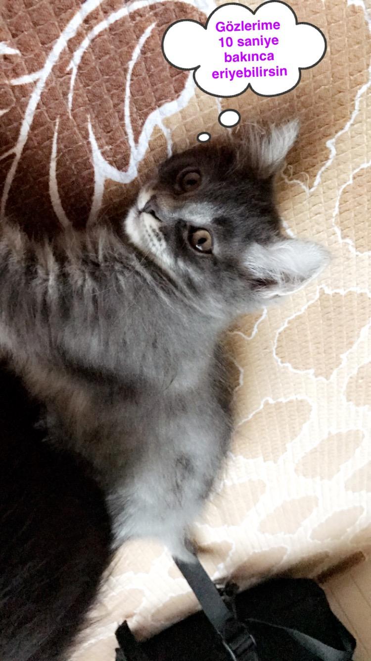 Minik Kedilere Acil Yuva