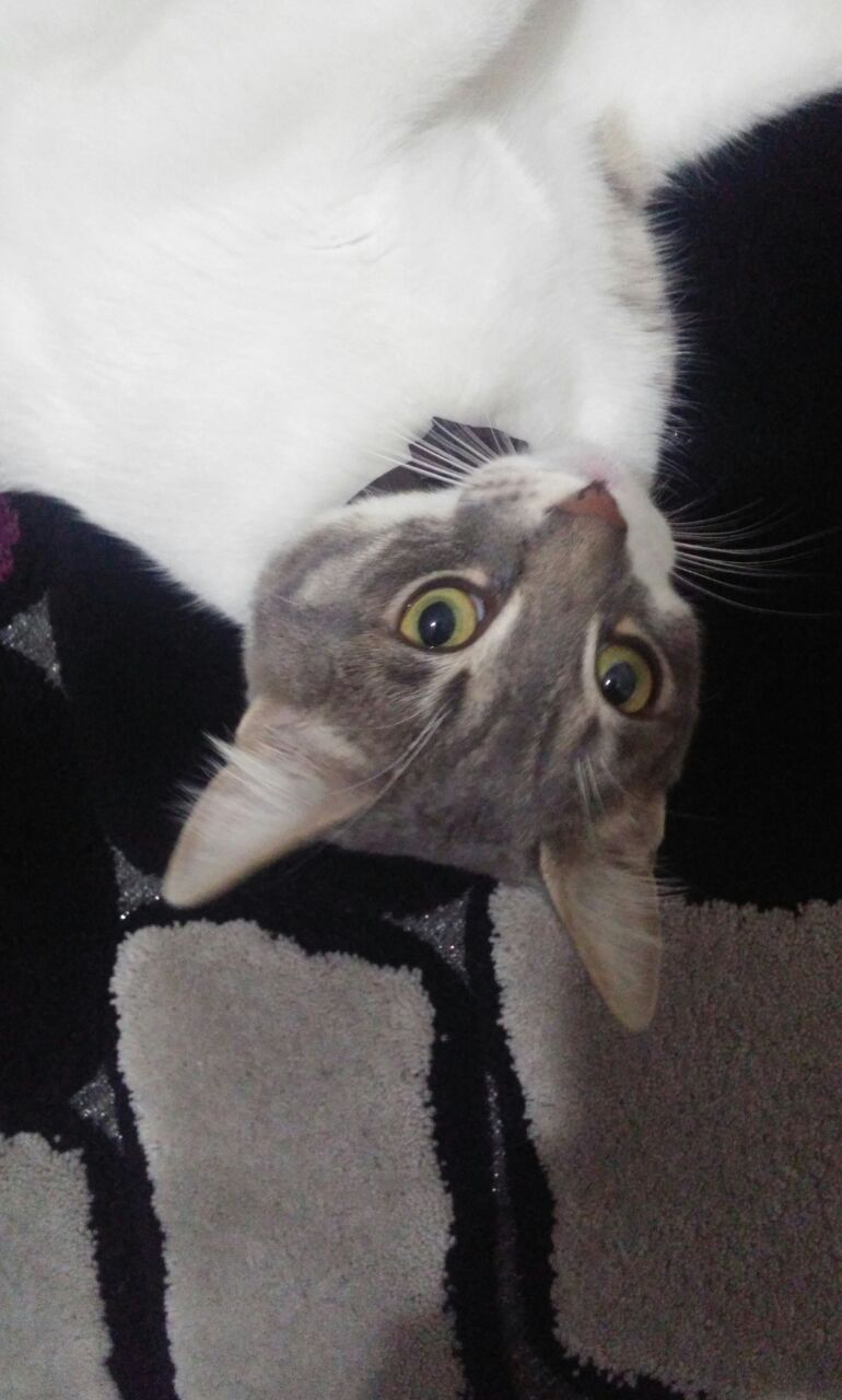 Acil yuwa ariyorum tuwalet egitimli mama we kum 2 aylik werebilirim ustu kapali tuwaleti mama su kapi onlarida werebilirim 11 aylik egitimli ew kedisi