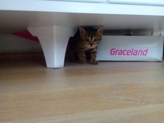 1 aylık dişi kedi kalıcı yuvasını arıyor! :)