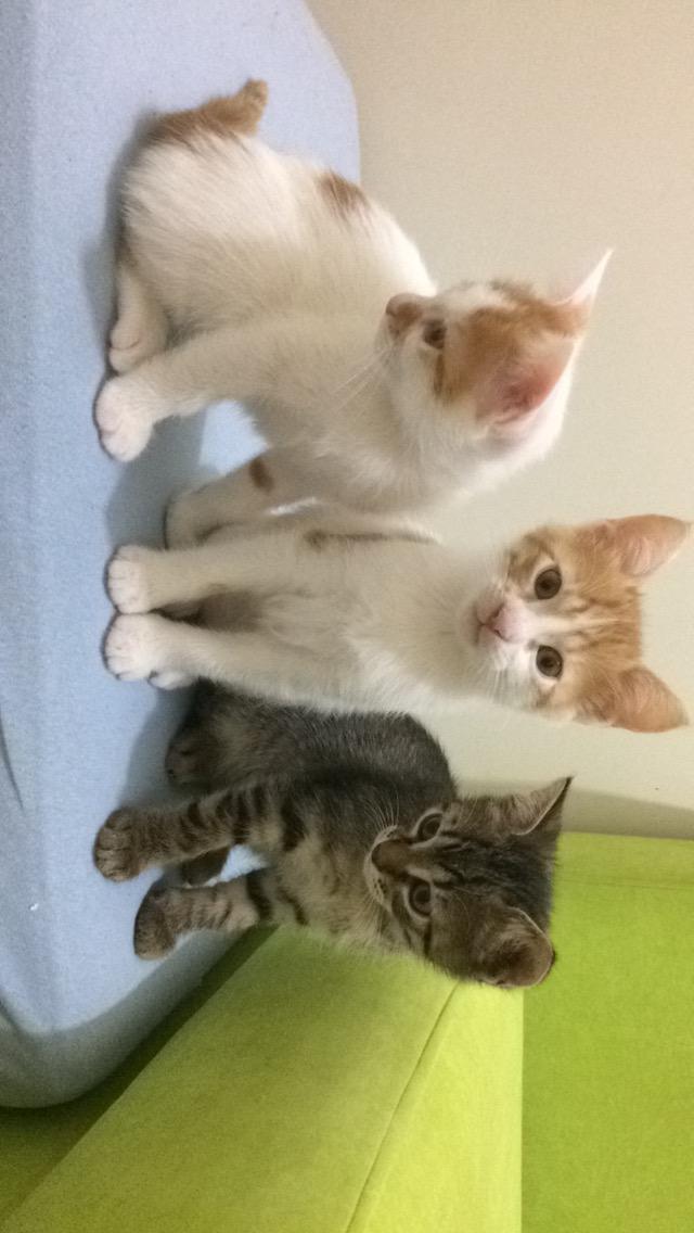 2 aylık kedi yavruları