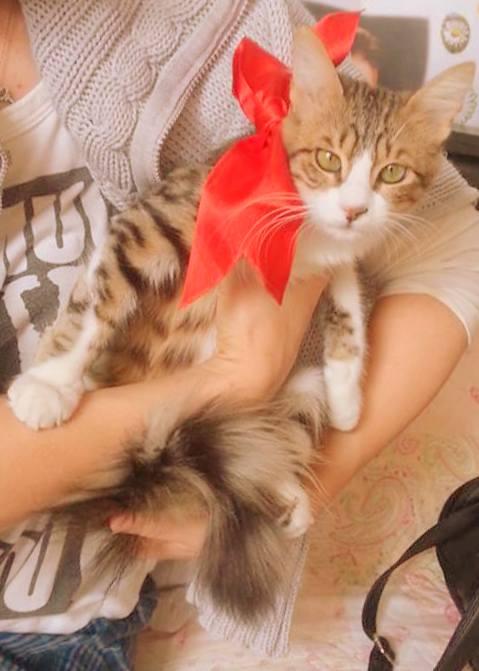 Öpücük kedi Şaşi