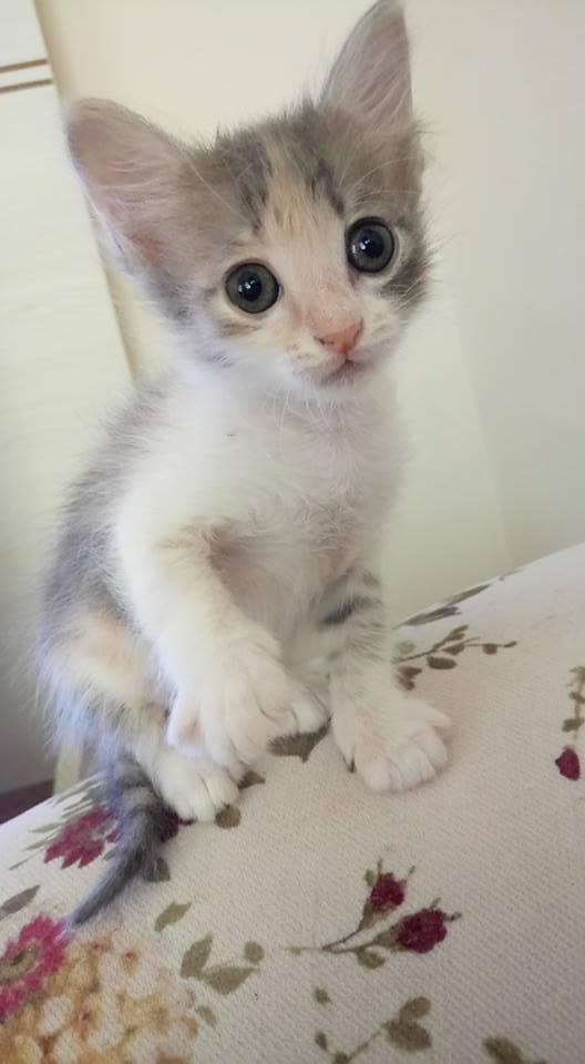 1 aylık iri gözlü minik dişi