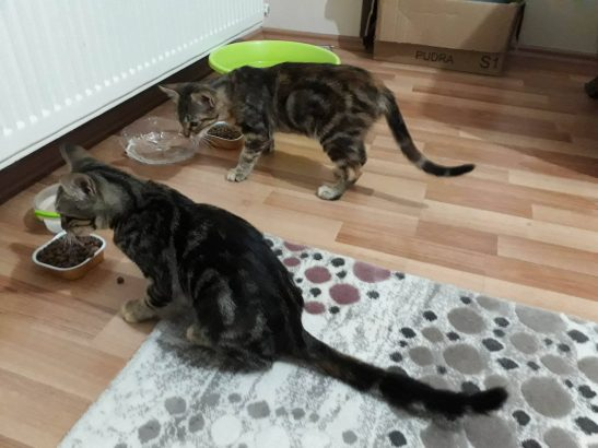 kediye sıcak yuva arıyoruz…