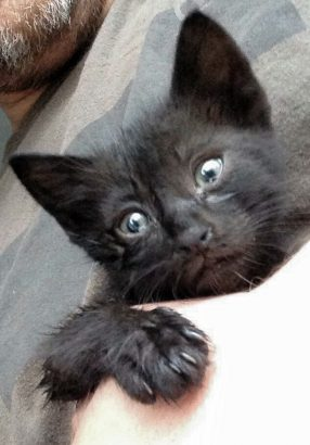 Simsiyah Yavru Kedi Acilen Yuva Arıyor