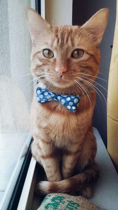 Kedim Marc Kayıp!!!!