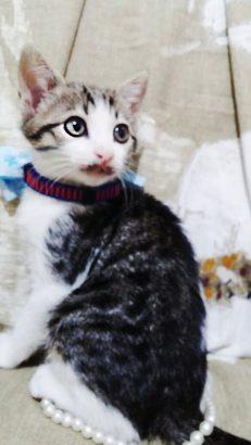 acil yuva 2 aylik yavru kedi eğitimli