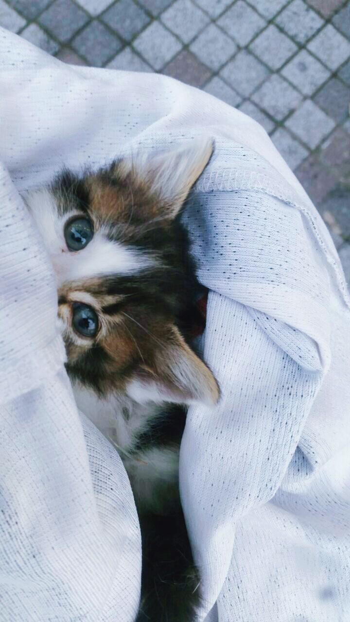 acil yuva 2 aylik eğitimli yavru kedi