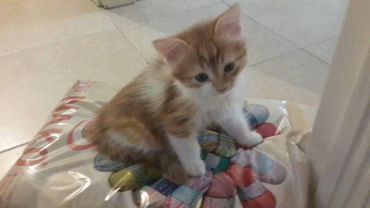 kedilerim için yuva arıyorum (Edremit)