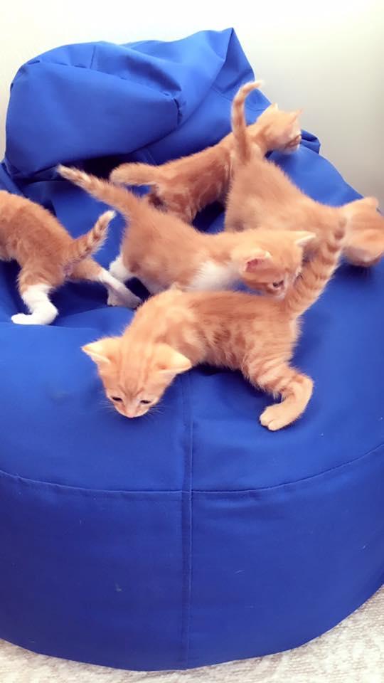 acil 3 adet yavru kedi
