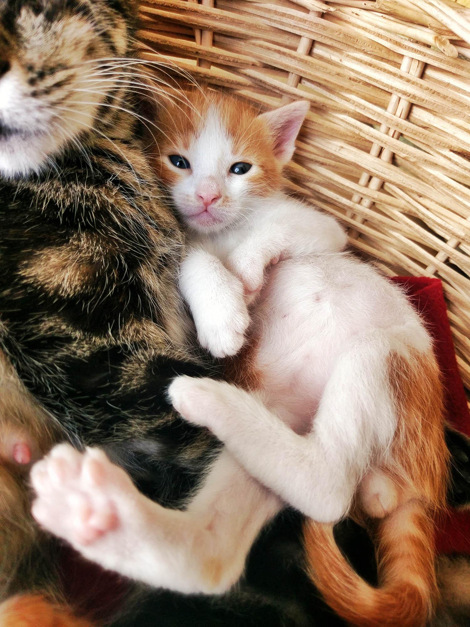 8 haftalık iki yavru kardeş