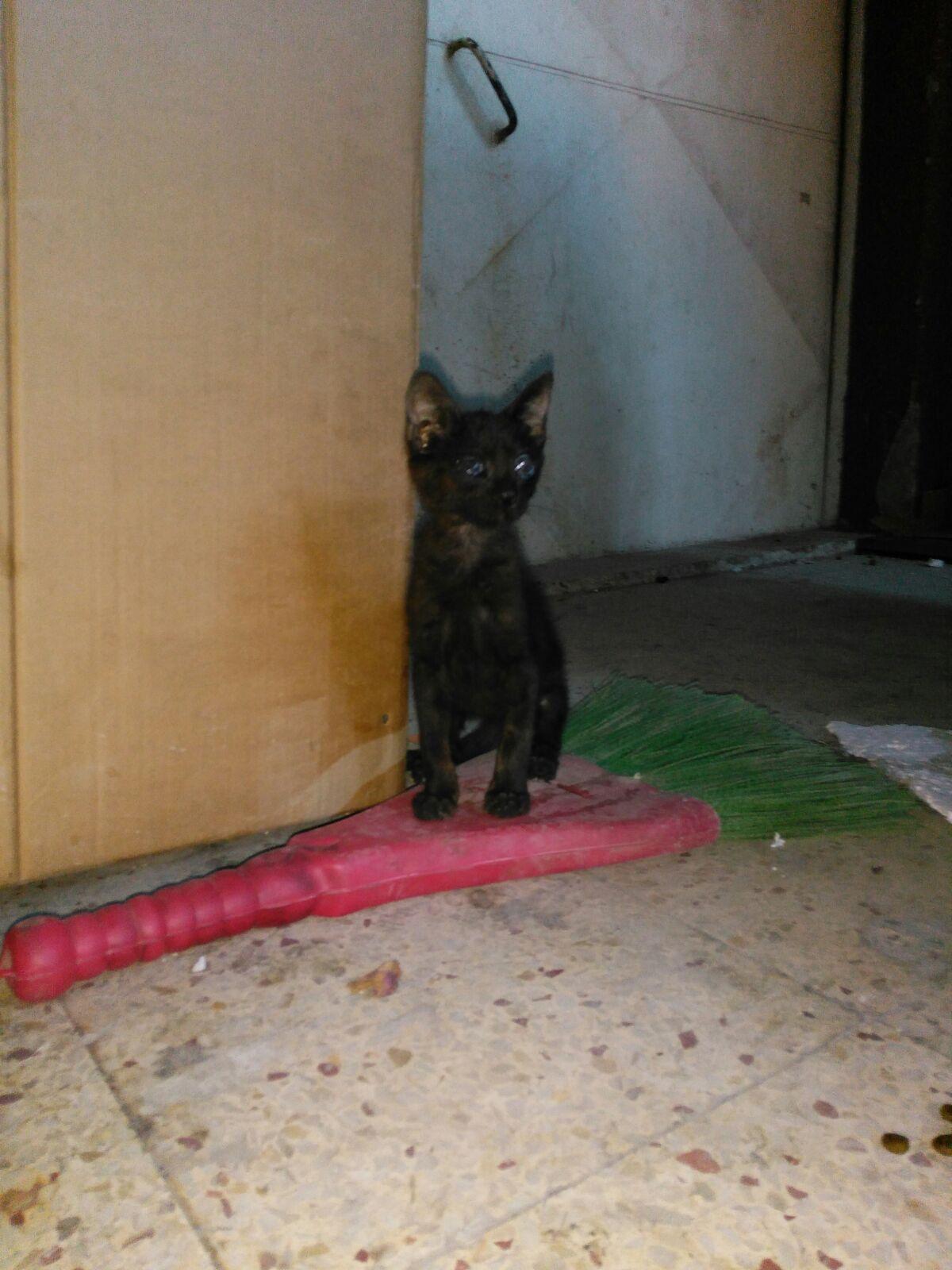 Kör kediye acil yuva arıyoruz