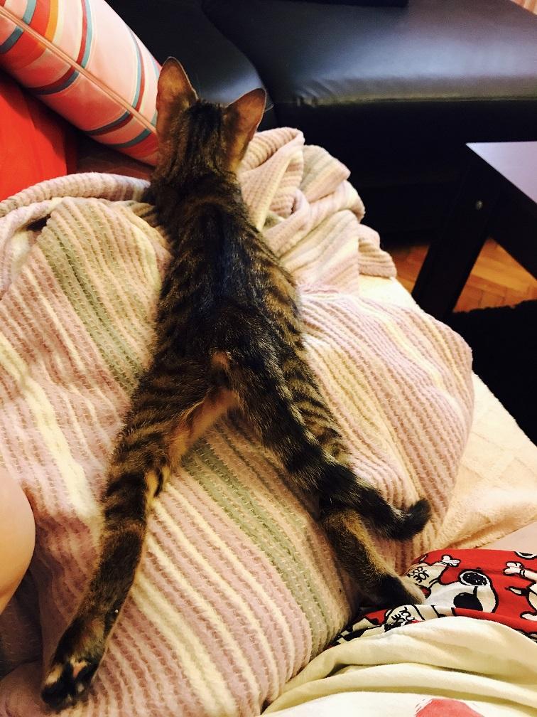 kim gurul gurul bir kedi ister