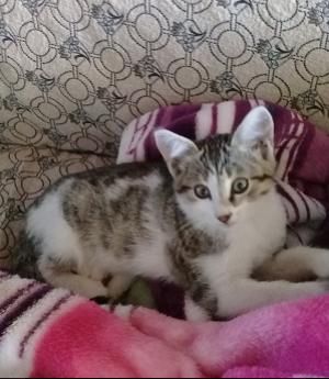 3 aylık kedilerime yuva arıyorum