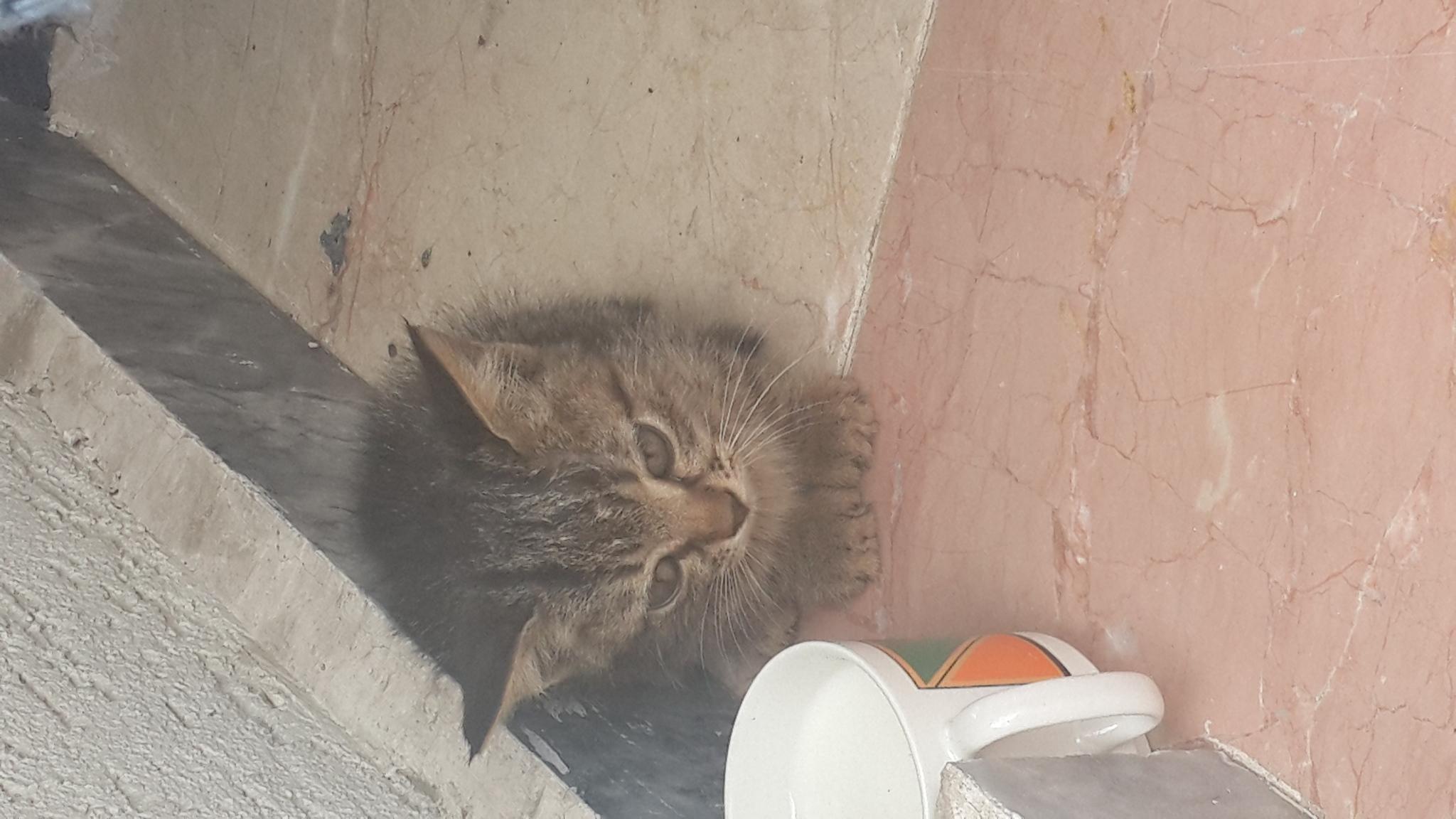 Eskişehir'de bulunan minik yavruya acilen bir yuva aranıyor!!!