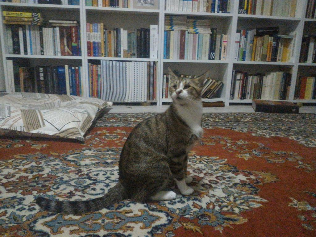 6 Yaşında gözleri olmayan kedim veysele yeni yuva arıyorum.