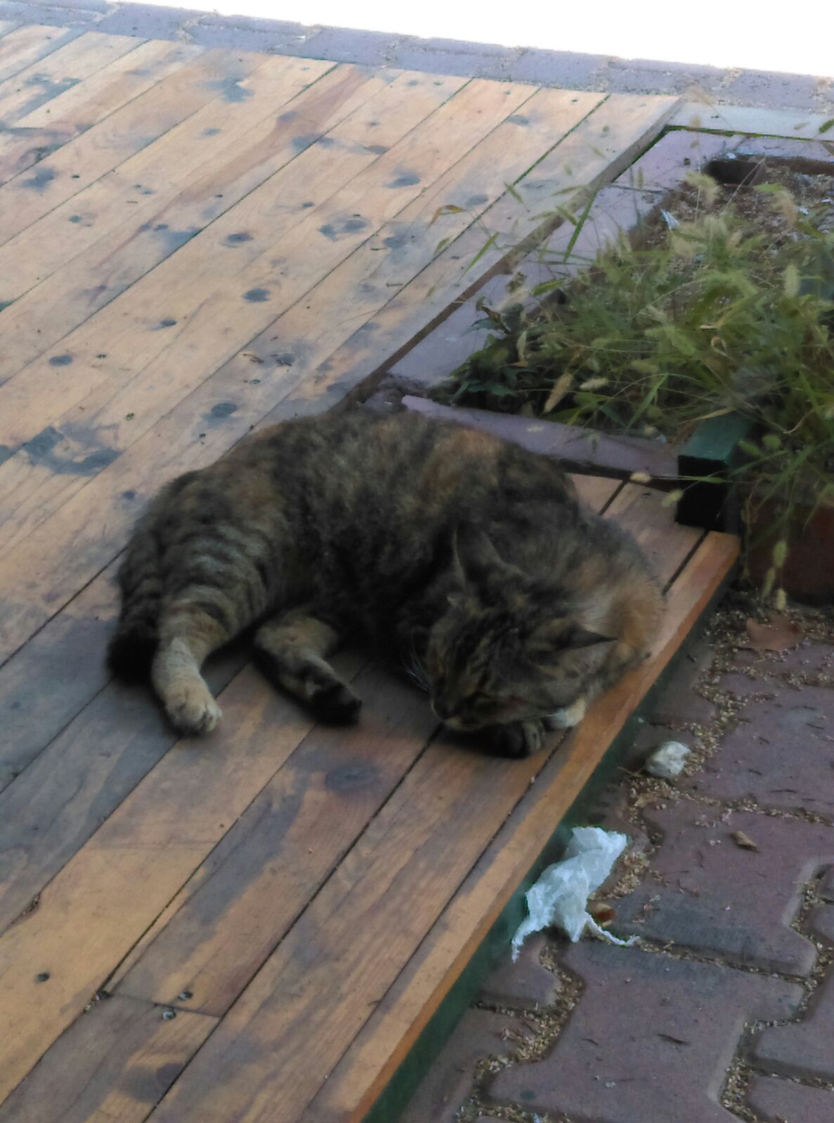 ev kedisi sokağa atılmış. acil yuva arıyoruz.