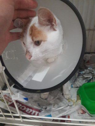 tedavisi yapılmış kedimize yuva arıyoruz