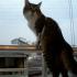 Yakın zamanda yatılı kursa gideceğim ve kedime bakacak kimse yok…