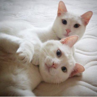 2 Van Kedisine Yeni Yuva