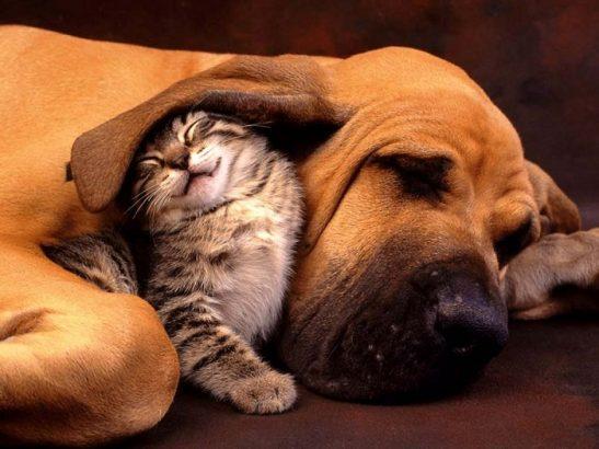 Kedi ve Köpek Dostluğu Başka Dostluklara Benzemez