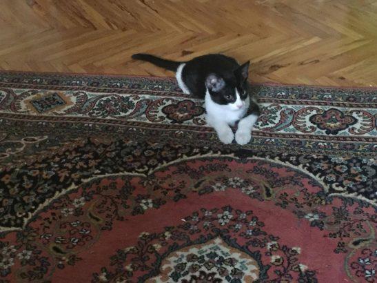 Merhaba adım Kedük, mekanın sahibiyim (yavru kedi)