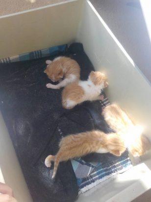 kurtarılmayı bekleyen 5 yavru kedi