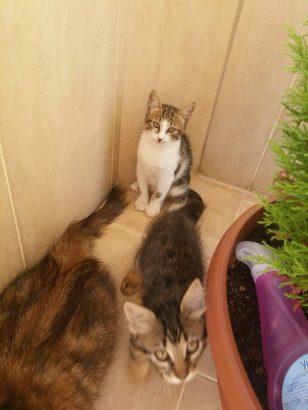 Alanya Mahmutlarda bulunan 2 aylık yavru kedilerimiz için yuva arıyoruz