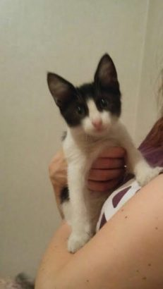 2,5 aylık yavru kedi Acil Yuva