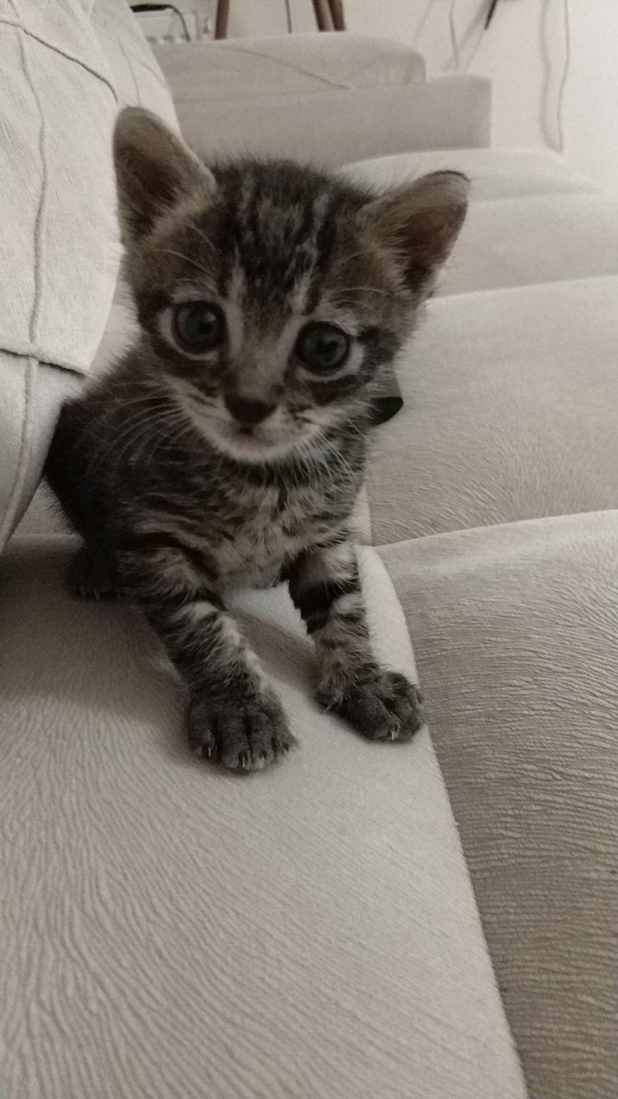 ÇOK ACİL (yavru kedi)