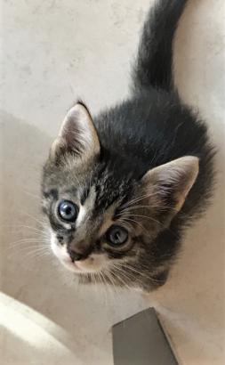 Evsiz bebek :( (yavru kedi)