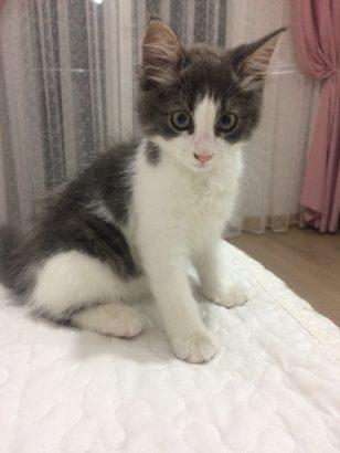 Mishamıza yuva arıyoruz (yavru kedi)