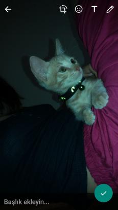 acil yuva aranıyor minik oğlumuza (yavru kedi)