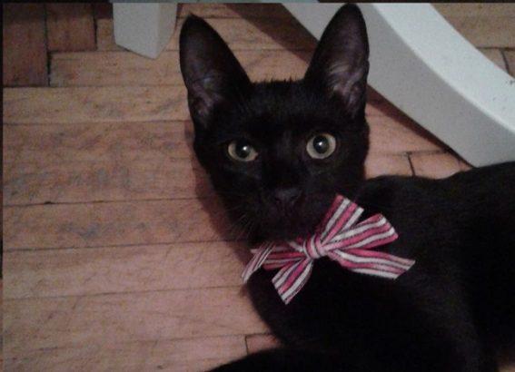 Kara kuzuya yuva (yavru kedi)