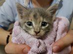 Paris için ömürlük yuva arıyoruz (yavru kedi)